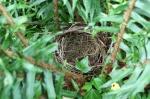 Nest in Swordleaf