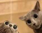 goggle-eyed-cat