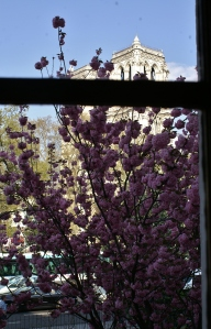 Window view at Shakespeare & Company