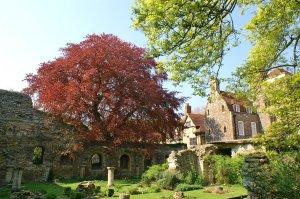Canterbury Monk's Garden