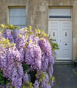Wisteria, Number 6, Royal Crescent