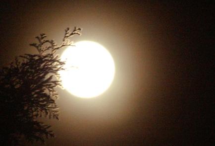 Moon and Cedar