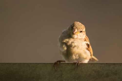 bird-sparrow.jpg